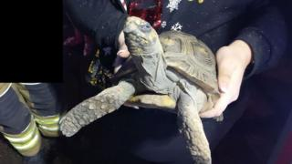 Tortoise rescued after setting Great Dunmow house on fire