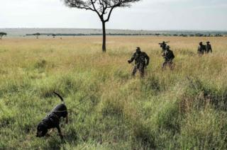 A Kenyan ranger holds his bloodhound on a lead