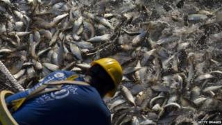 Fisherman inspecting catch (Getty Images)