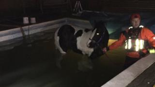 Horse in pool with fire fighter