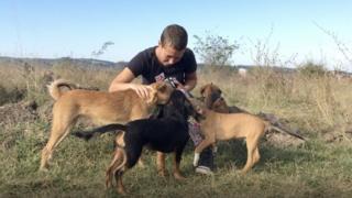 Psi okupljeni oko jedne od volonterki udruženja Beta