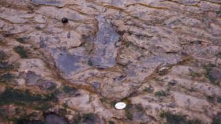 Dinosaur footprint on Skye