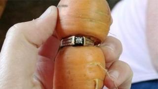 nişan yüzüğü havuçtan çıktı