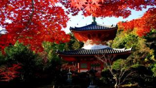 Символ духовной солидарности - пагода XVI века, в которой хранятся религиозные реликвии и статуя будды Амитабхи, самой почитаемой фигуры в популярной в Японии буддийской школе Чистой земли