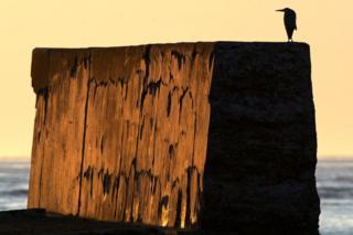Heron at Sandhaven