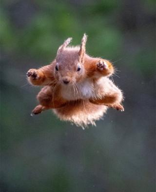 flying squirrel in nairn