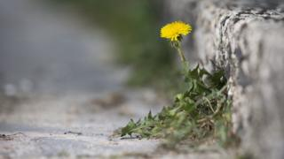 weeds on pavement
