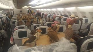 Falcons on board a Middle East airliner