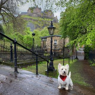Dog with castle in the background.
