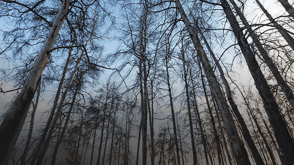 Kızıl orman