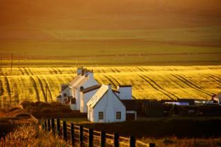Field of barley in Islay