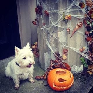 Bonnie the dog with pumpkin lantern