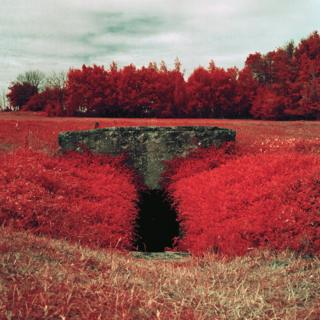 Infrared photograph of a bunker, surrounded by plants