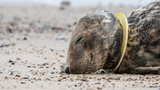 Пластик убивает
