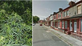 Cannabis and Suburban Road in Anfield