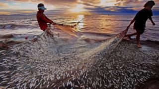 ৬৫ দিনের জন্য সমুদ্রে মাছ ধরার ওপর নিষেধাজ্ঞা আরোপ করা হয়েছে