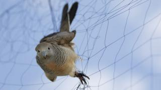 Pássaro preso em rede de neblina