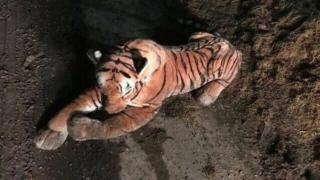 Tiger cuddly toy