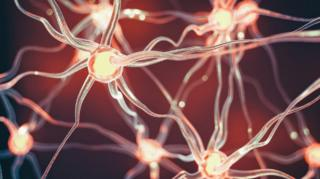 ภาพจำลองโครงสร้างของเซลล์ประสาท