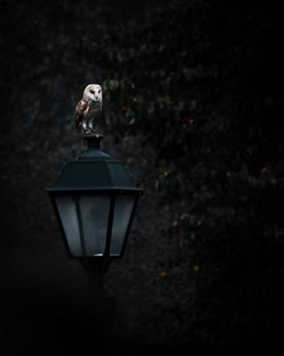 Owl sitting on a lantern