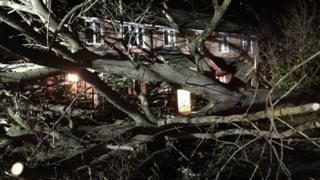 Didcot fallen tree