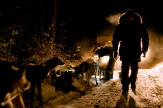 Huskies at night