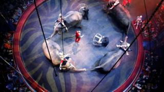 Elephants performing in a circus in France