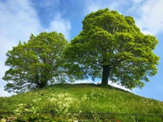 Two trees on the Oxford Castle Mound in the morning sunshine