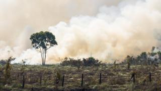 Árvores em meio a queimada
