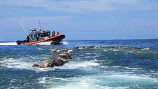 A Mexican Navy boat sails near the dead turtles in Oaxaca