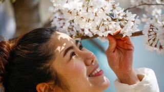 對轉瞬即逝之美的欣賞體現在日本一些最簡單的快樂中,比如每年一度的賞櫻。