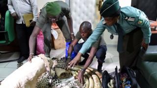 côte d'ivoire, arrestation des trafiquants, espèces protégées