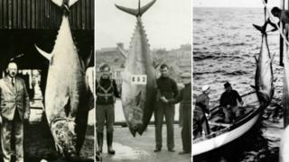 Three large dead tuna caught off the British coast with the rod anglers who caught them