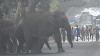 ஒரிஷா அரசு கணக்குப்படி யானை தாக்குதலால் 60 பேர் பலி