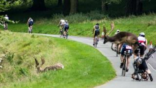 The stag collided with competitor Shane O'Reilly as he cycled in Phoenix Park in Dublin