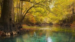 Chipola River, Florida, International Garden Photographer of the Year