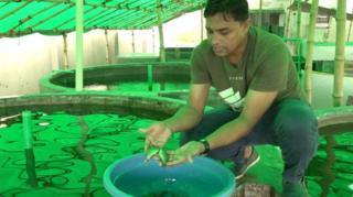 ঢাকাতে বদ্ধ জয়গায় হচ্ছে বাণিজ্যিক মাছ চাষ
