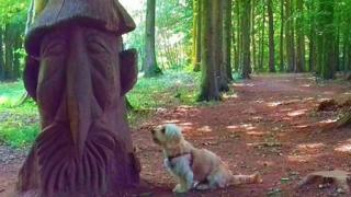 Charlie the cavapoo looks at a wooden sculture at Fforest Fawr