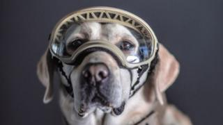 Frida, a Mexican Navy rescue dog, photographed by Santiago Arau
