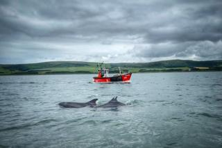 in_pictures Sailing with a playful pod of dolphins in Loch Ryan during my staycation.