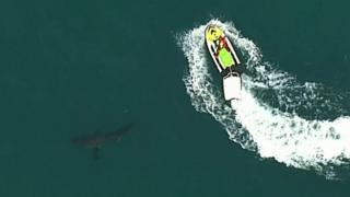 The shark remained in the area for several hours before disappearing