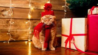 Рождественский кот с подарками