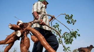 Cultivador de yuca