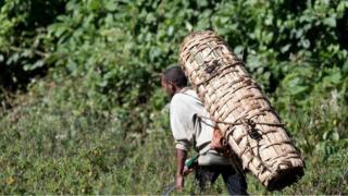埃塞俄比亞(Ethiopia)哈萊納森林(Harenna Forest)養蜂人的蜂箱