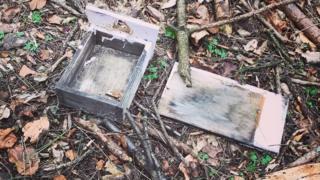 Damaged bird box