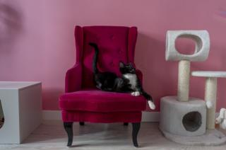A cat in a chair