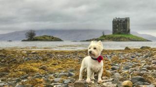 A west highland terrier in Edinburgh