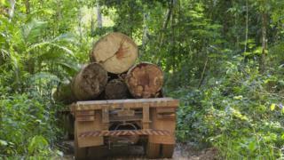 Caminhão com toras de madeiras no meio da Amazônia