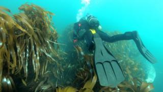 HMS Montagu: Battleship wreck given protected status