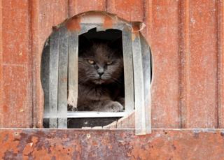 Calin, a European cat, looks out of a hole in the wall
